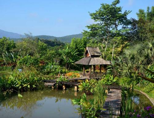 Enjoy the Best Views of Flora and Fauna with Luxury Accommodations in Chiang Mai