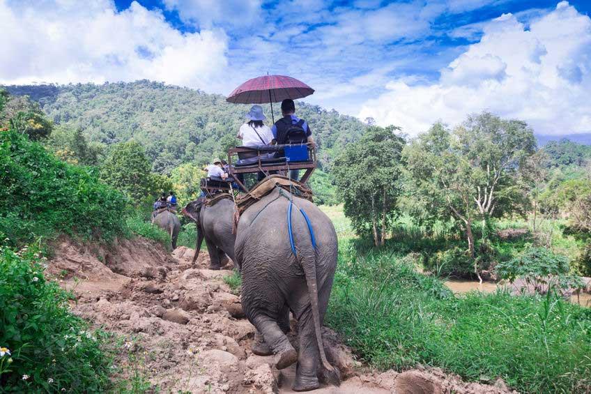 Elephant Riding Chiang Mai