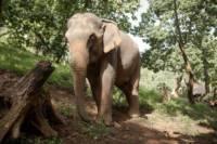 Chiang Mai elephant riding