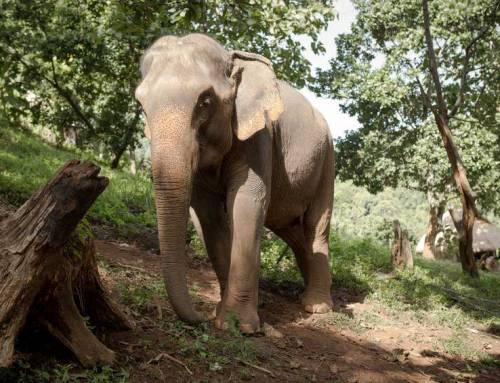 Top 3 Reasons to Go for an Elephant Ride During a Vacation in Chiang Mai
