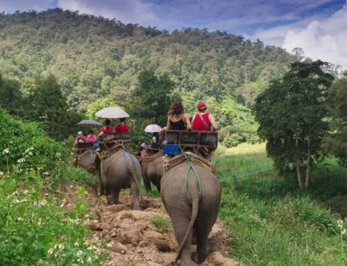 The Ultimate Chiang Mai Safari Starts on an Elephant's Back