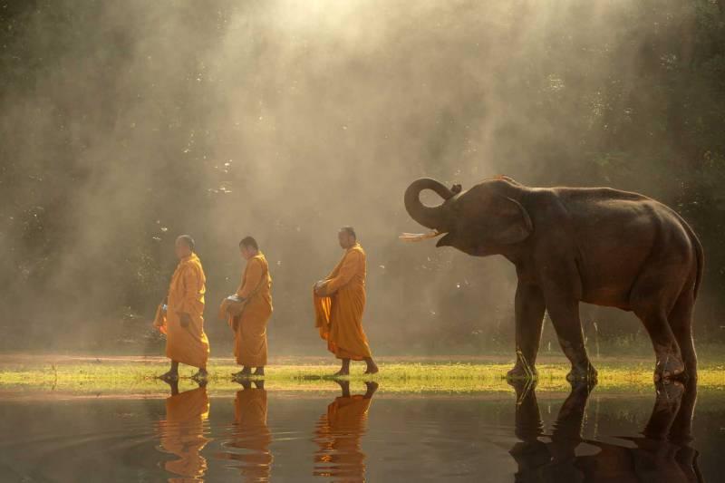 Thailand Animals