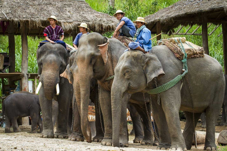 chiang mai elephant camps