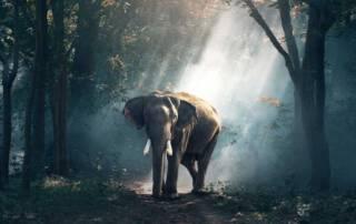 Ethical elephant sanctuaries Thailand